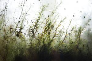 Tiny Moss Jungle by Rick-TinyWorlds