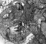 Detail InnerMe