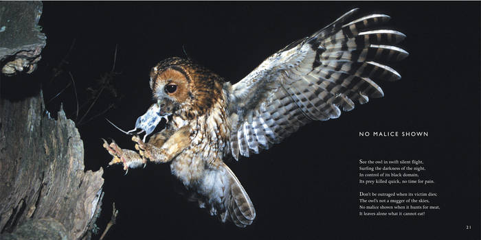 Owl Poem: No Malice Shown -Owls Poetry