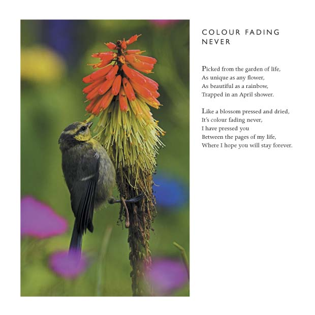 I Love You Quotes: Colour Fading Never -Love Poem By Clive Blake By