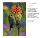 Love Poem -Colour Fading Never -Clive Blake