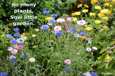 Garden Quote -So Many Plants -by Clive Blake by CliveBlake