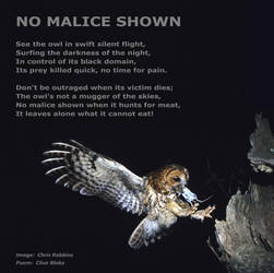 Owl Poem -No Malice Shown -Owl Poetry by C Blake by CliveBlake