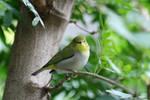 Bird 07 by JoKeR0720