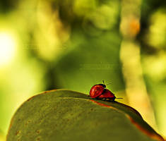 Ladybug love by SnowFox1