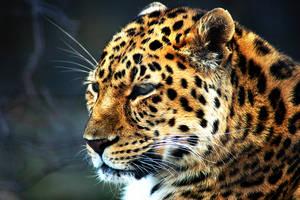 Leopard 2 by SnowFox1