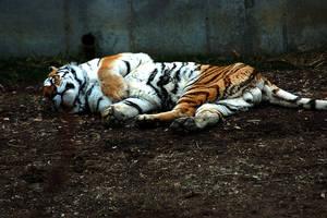 Kitty Nap by SnowFox1