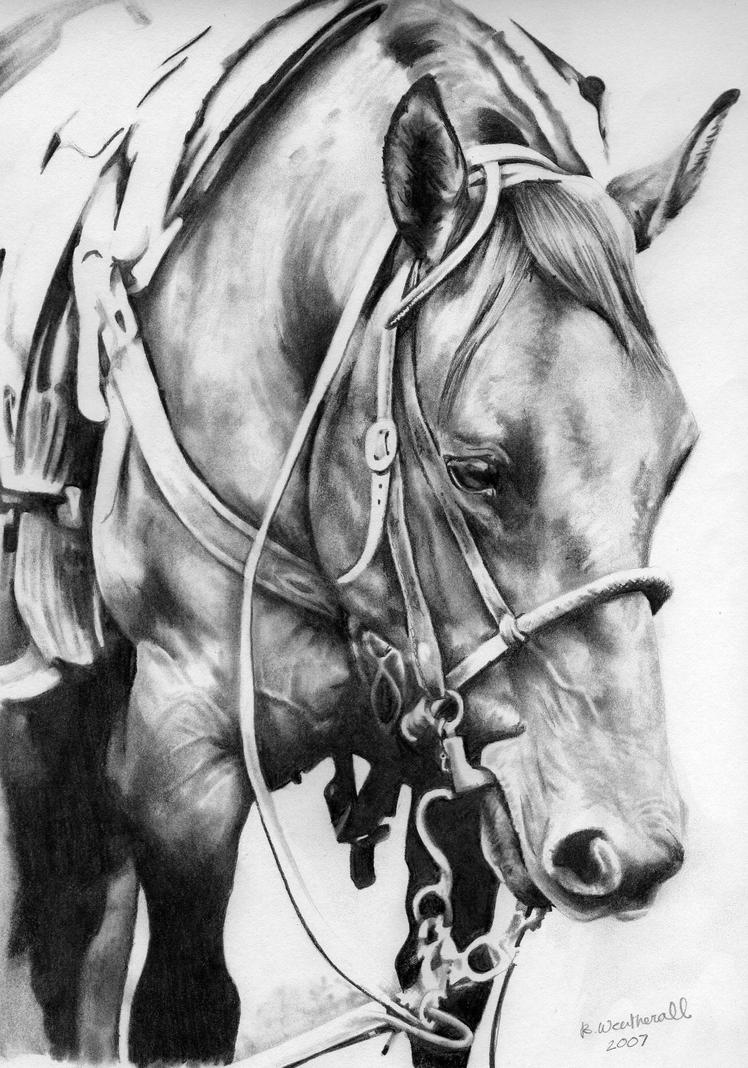 Quarter horse drawing - photo#10