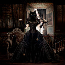 The Lady Cat