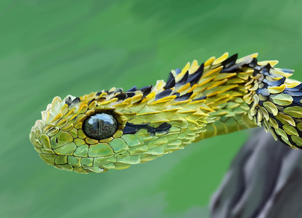 Snake painting by Skitak