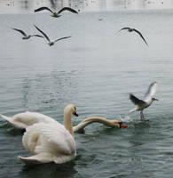 Birds play... by contesafantoma