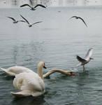 Birds play...