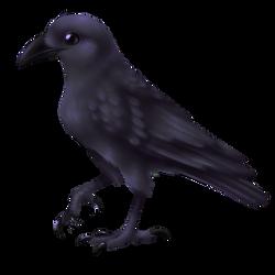 crow by diabloceratops