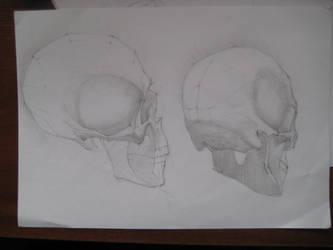 skullstudy by klowolk