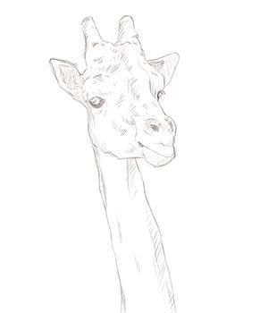 one long neck boi