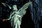 Angel with Rose - Ohlsdorf
