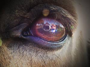 the mirror eye
