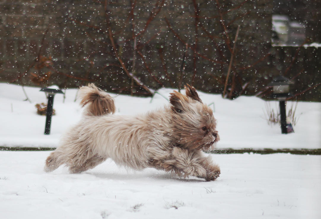 Like a Snowbunny by wiingzz