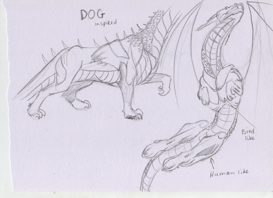 Other dragon anatomy types by DucoNL on DeviantArt