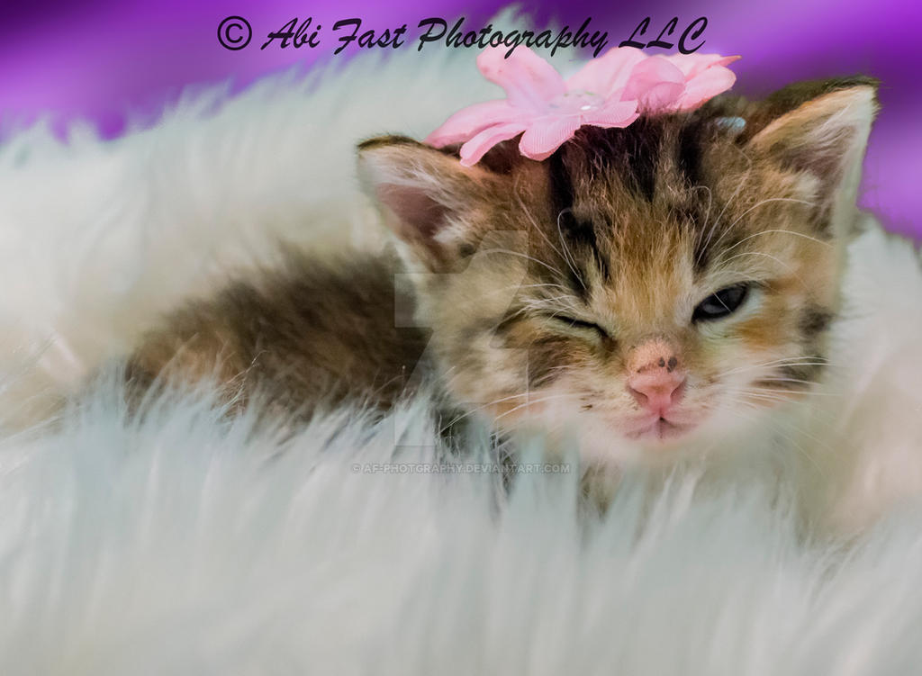 Big Bang kitten 4 by AF-Photgraphy
