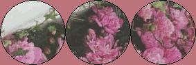 aestethic f2u flowers