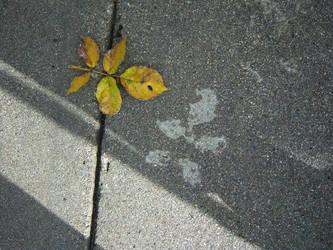 Imprint by dewfallen