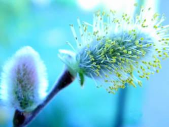 Spring Buds by dewfallen