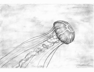 Jellyfish by dewfallen