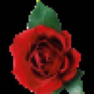 rose843's Profile Picture