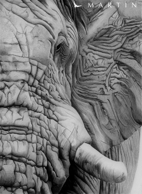 Elephant portrait drawing by Martin--Art