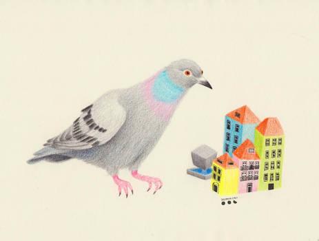 Pigeon in Porto