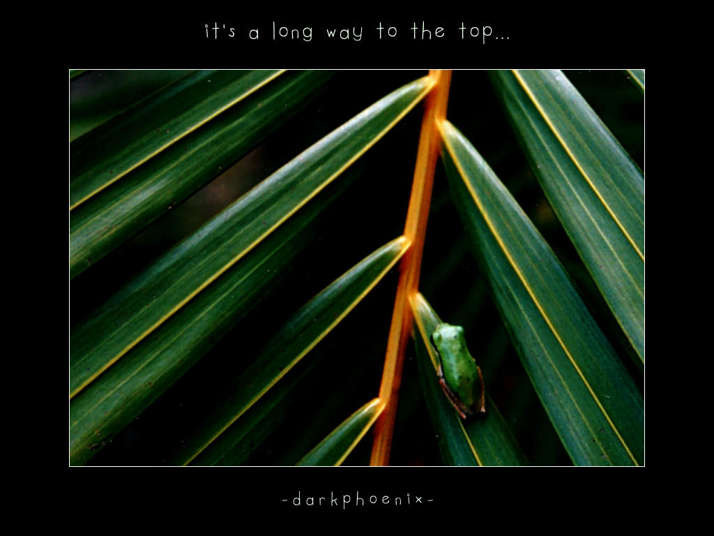 It's a long way to the top... by darkphoenix