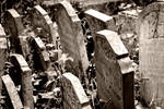 Abney Park Cemetery X