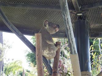 San Diego Zoo by tales06