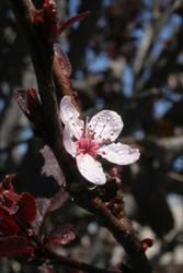Springtime in Phoenix 08