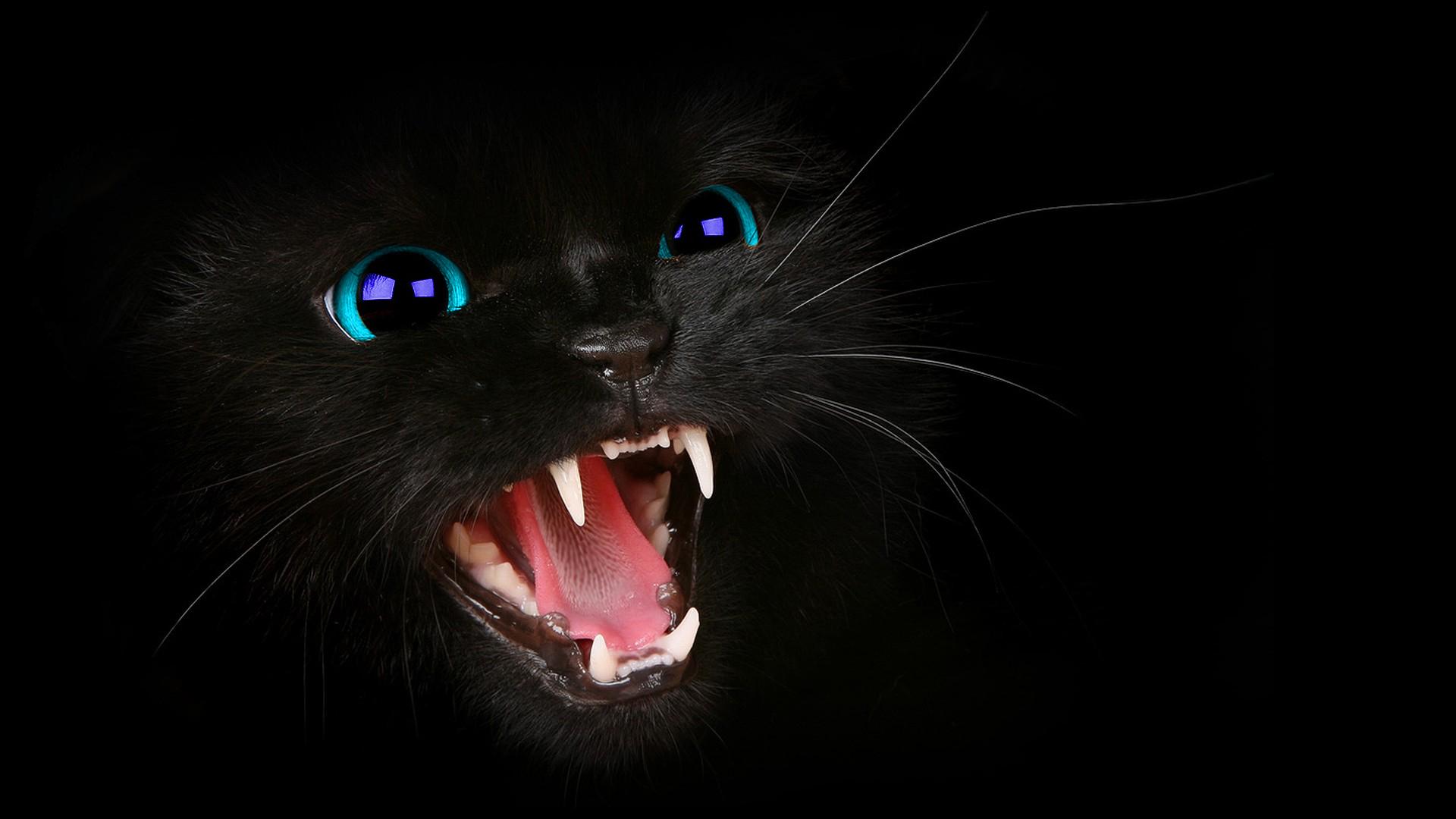 Animals Black Cat Blue Eyes Cats Dark Photo Manipulation - WallDevil