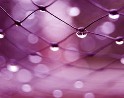 The Wet Net by JVarriano