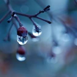 Loney Winter