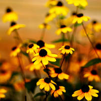 little yellow cute flowers by meyrembulucek