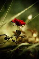 solitude by meyrembulucek