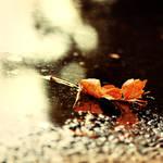 hello autumn, by meyrembulucek