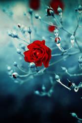 frozen rose by meyrembulucek