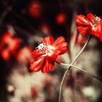 little things by meyrembulucek