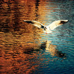 where do birds fly? by meyrembulucek