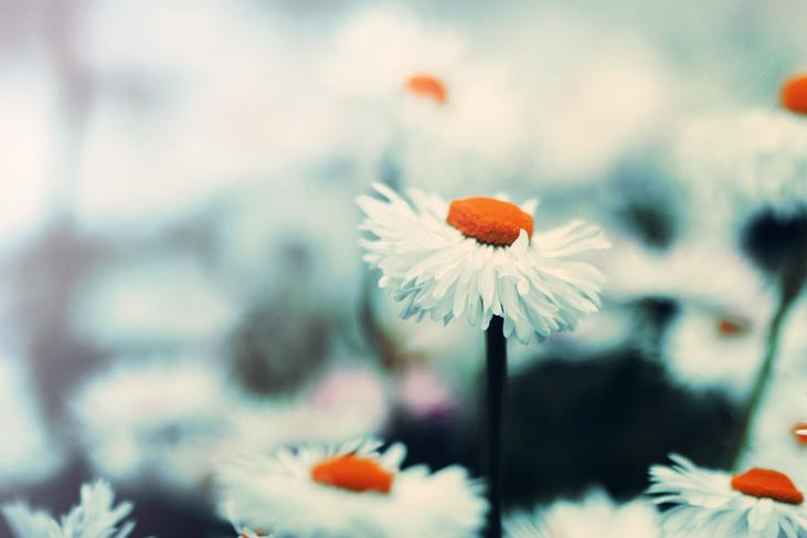 Sebelah kaki mereka sudah berada di dalam tamanan indah di syurga. Nyata saya cemburu dengan mereka.  ~ picture by m-a-e-e of Deviant Art