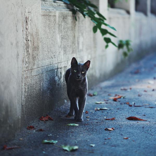 felinae by meyrembulucek