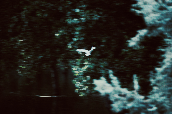 only the winds by meyrembulucek