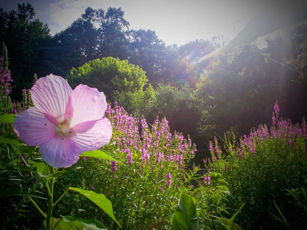MORNING LIGHT 2012 by morningstarskid