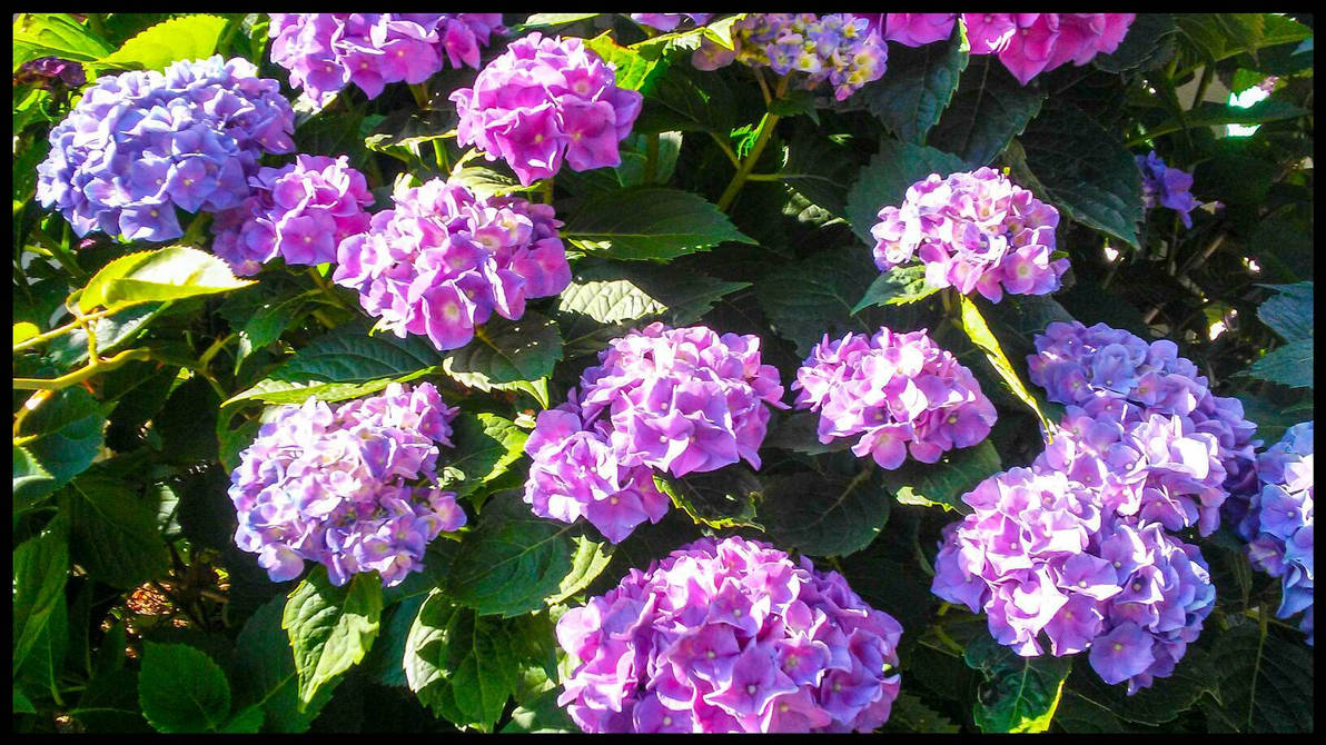 Colors of Summer by morningstarskid