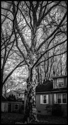 Ghost Tree by morningstarskid